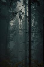 Dark Mysterious Forest In Fog