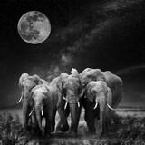 Fototapeta Kawa jest smaczna - Beautiful night landscape with elephant, moon and the Milky Way galaxy