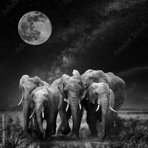 Beautiful night landscape with elephant, moon and the Milky Way galaxy