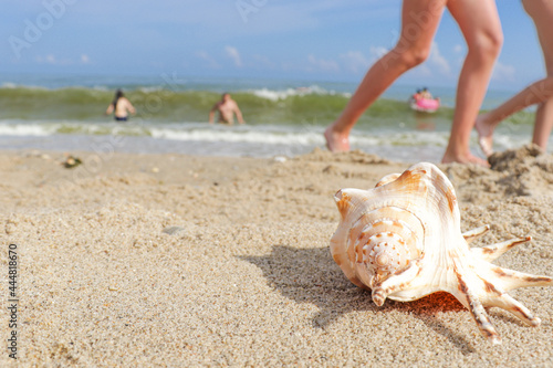 Fotografija Seashells on a tropical seashore lying on the golden sand under the hot summer sun with copyspace