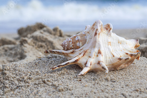 Slika na platnu Seashells on a tropical seashore lying on the golden sand under the hot summer sun with copyspace