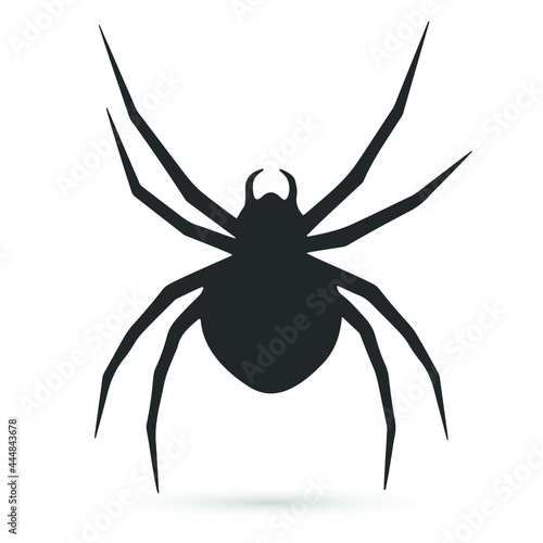 Fotografiet Spider silhouette isolated on white background.