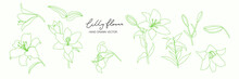 Minimal Botanical Graphic Sketch Line Art Drawing, Trendy Tiny Tattoo Design, Floral Elements Vector Illustration In Lilly Flower