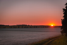 Red Sunset And Whitish Field With Wheat And Oats.
