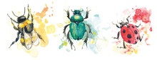 Watercolor Illustrations Of Insects. Bee, Bumblebee, Beetle And Coccinellidae.