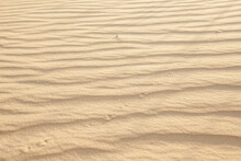 Footprints In The Sand In The Desert In The Summer