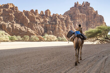 Camels Come Out Of The Canyon, Guelta D'Archei Canyon, Chad, Africa