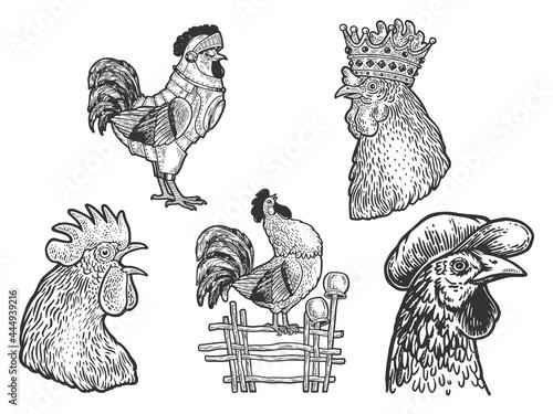 Rooster cock set line art sketch engraving vector illustration Fotobehang