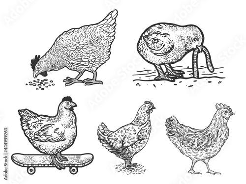 Obraz na plátně Chicken hen set line art sketch engraving vector illustration