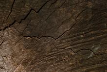 Tree Cuts In Redwood Park, Beautiful Wood Texture