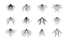 Roots Collection. Vector Outline Illustration. Plant In Garden.