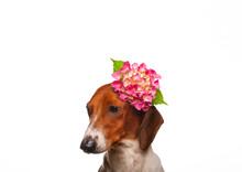 Image Of Dog Flower White Background