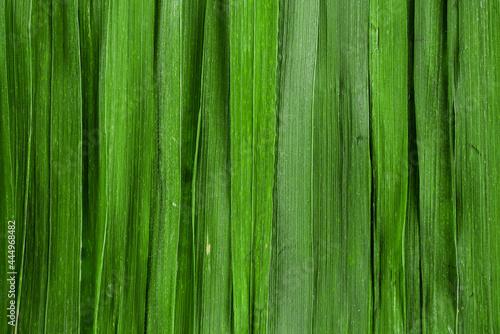 Obraz na plátně Green grass background