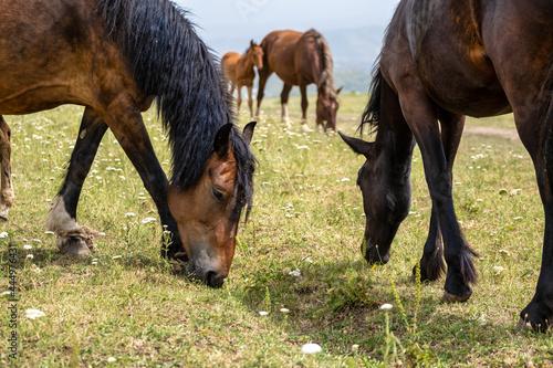 Fotografia horse and foal