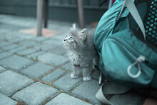 Adorable Fluffy Little Kitten With Blue Eyes Looks Attentively Around On The Street