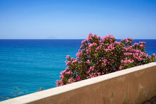 Oleander Flowers And Turquise Sea In Tropea, Italy, Stromboli Volcanic Island In The Background