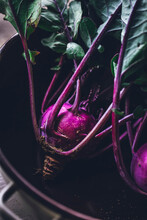 Purple Kohlrabi Fresh From The Garden In A Bowl