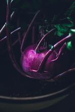 Close Up Of Purple Kohlrabi Fresh From The Garden