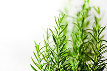 Detail Image Of A Fresh Rosemary Plant Against A White Wall.