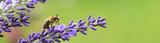 Fototapeta Natura - Garten 1225