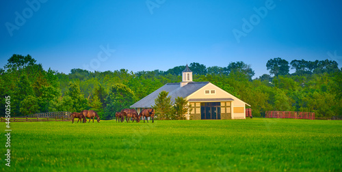 Wallpaper Mural Thoroughbred horses grazing in a field with horse barn.