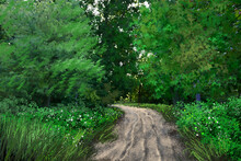 Digital Oil Paintings Landscape, Path In The Forest. Fine Art.