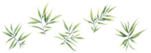 Watercolor Illustration With Green Branches And Bamboo Leaves Isolated Elements On A White Background. Botanical Illustration For Postcards, Posters, Banners, Fabrics.