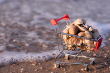 A Shopping Basket With Shells On The Seashore. Close-up. The Concept Of Recreation And Trade At A Seaside Resort. Copy Space