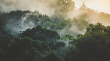 Tropical Rainforest Landscape, Forest Scenic With Jungle Tree In Green Nature, Beautiful Wild Wood Foliage Plant Over The Mountain, Leaf With Rain Water, Environment Park Background For Travel