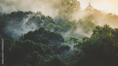Fotografia tropical rainforest landscape, forest scenic with jungle tree in green nature, b