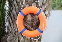 An Orange Lifebuoy Hangs On The Ropes On A Palm Tree