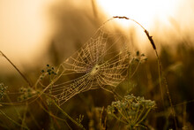 Dew On The Spider Web