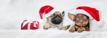 Dachshund Puppy And Pug Puppy Wearing Santa Hats Sleep Together  Near A Gift Box Under A White Blanket On A Bed At Home . Top Down View. Empty Space For Text
