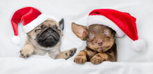 Dachshund Puppy And Pug Puppy Wearing Santa Hats Sleep Together  Under A White Blanket On A Bed At Home. Top Down View