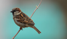 Closeup Shot Of A Sparrow Bird Perched On A Tree Branch
