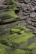Rocks During Low Tide