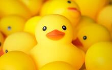 Closeup Of Rubber Duckies