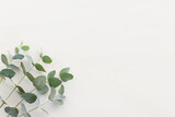 Top view image of eucalyptus composition on white wooden background .Flat lay