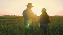 Farmer And Businessman Talking, Working In Wheat Field, Making Deal, Using Tablet. Agricultural Business Concept. Growing Food. Companions, Work Colleagues. Wheat Field. Senior Farmer And Woman Farmer