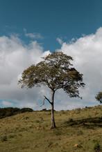 Árvore, Cambuquira, Minas Gerais - Brasil
