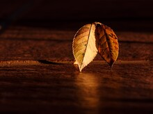 Super Amoled HD Landscape Picture Of Old Leaves On Wooden Background.