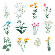 Plants And Herbs, Wild Vegetation And Botany Bloom