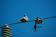 A Mourning Dove Bird Is Sitting Perched On Electrical Cable Near Transformer Against Blue Sky