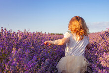 A Child In A Lavender Field. The Girl Enjoys The Smell And Beautiful Flowers. Purple Bushes With Essential Oil. Love Of Nature, Harmony, Happiness And Tranquility. Back