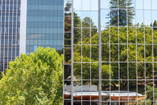 Trees Reflecting At The Facade Of A Sky Scraper In Auckland