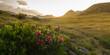 Panoramabild mit Alpenrosen und Sonnenuntergang in den tiroler Bergen