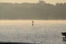 Heron On Lake Bouy