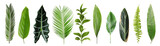 Set with beautiful fern and other tropical leaves on white background. Banner design
