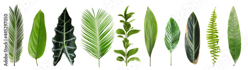 Canvas Print Set with beautiful fern and other tropical leaves on white background