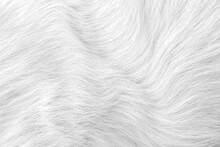 White Grey Cat Fur Texture Seamless Patterns Or Animal Skin Background